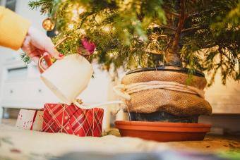 Sugar Water for Christmas Trees: Will It Keep Your Tree Fresh?