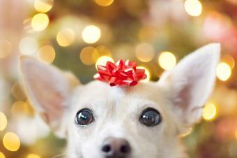 A dog as a Christmas present