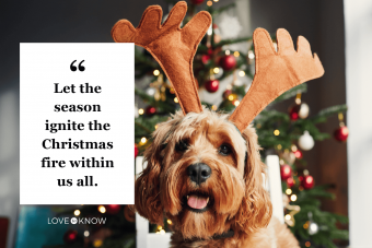 Dog wearing reindeer antlers at Christmas time