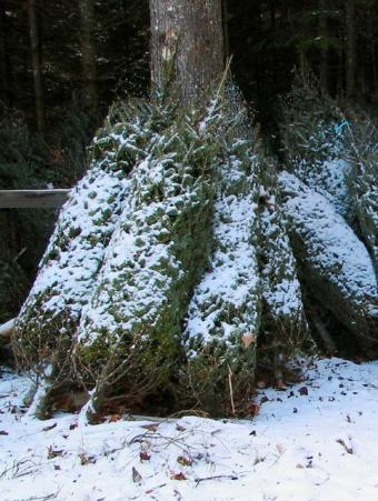 Christmas Tree Shop: When to Visit and What to Expect