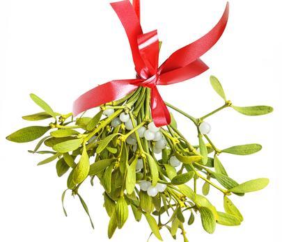 Mistletoe; © Verastuchelova | Dreamstime.com