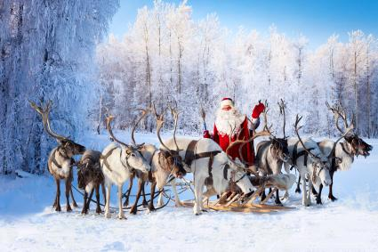 Santa Claus and his reindeer in the forest