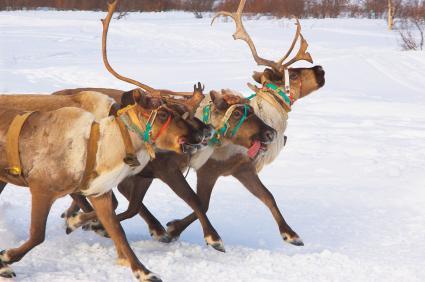 List Of Santa S Reindeer Names Lovetoknow