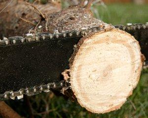 Attractive A Fresh Cut Will Help Your Tree Last Longer.