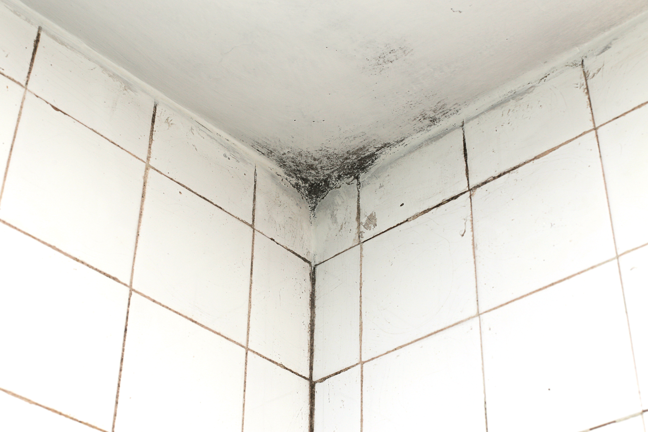 Bathroom ceiling mildew - Bathroom Ceiling Mildew 48