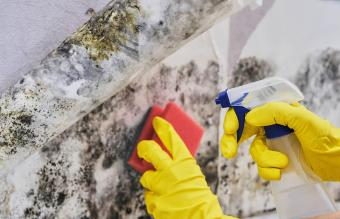 Homemade Mold & Mildew Cleaners That Work