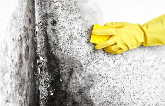 removes black mold from the wall