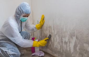 removes mold from wall