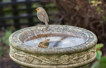 How to Clean a Bird Bath and Keep It Fresh