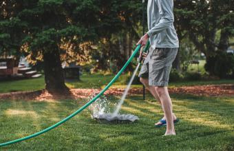 clean bird bath with garden hose