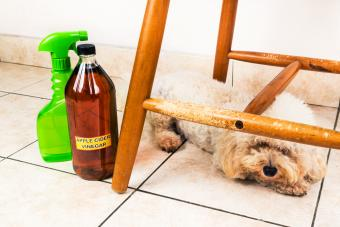 Apple cider vinegar deterring pets from chewing on furnitures