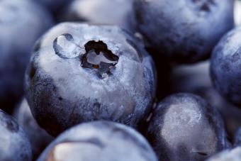 macro photo of fresh blueberrie