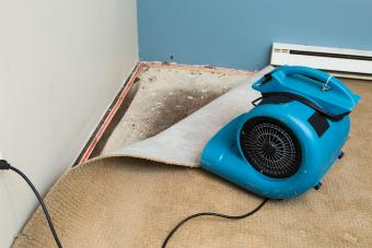 How to Get Rid of Mildew Smells for Good