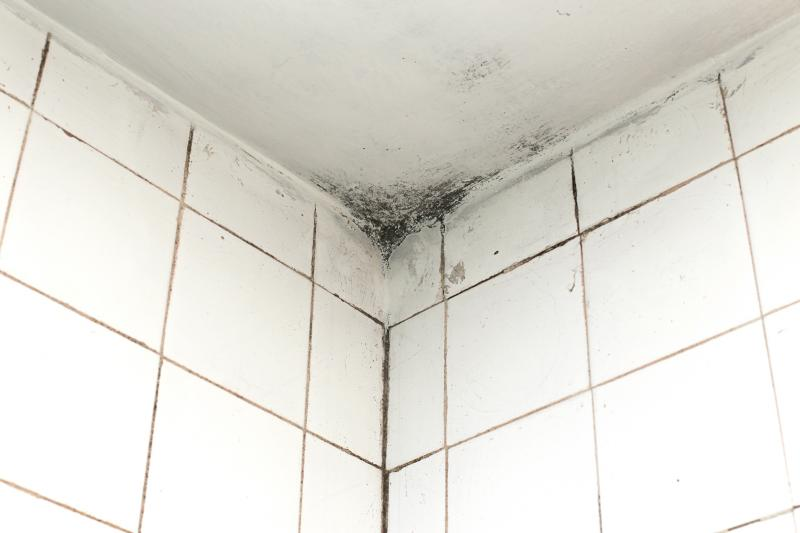 Cleaning Mold From Bathroom Ceilings, How To Get Rid Of Mould In Bathroom Walls