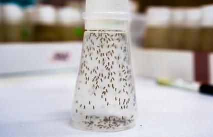 Vial containing Fruit Flies