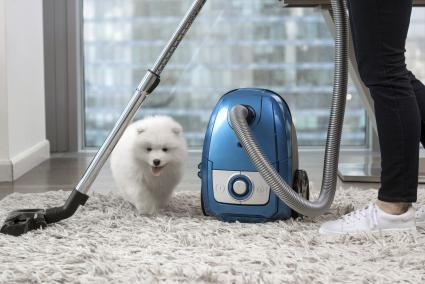 Woman vacuuming shag rug with dog watching