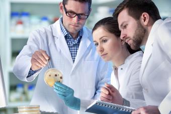 Biomedical engineers working