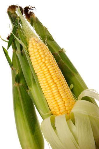 Freshly Picked Corn