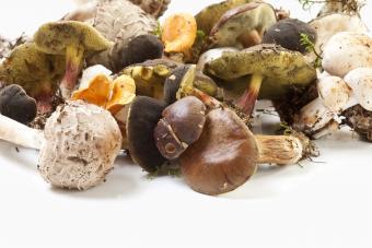Types of Edible Mushrooms