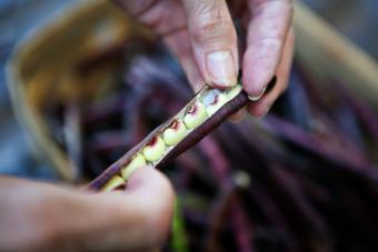 How to Cook Fresh Purple Hull Peas