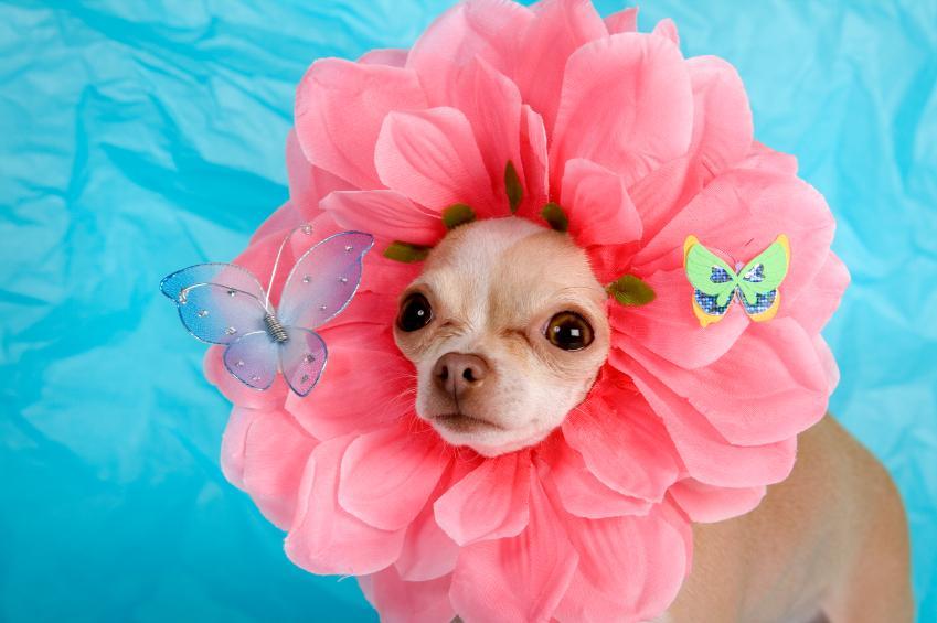 How to Make Dog Costumes & How to Make Dog Costumes | LoveToKnow