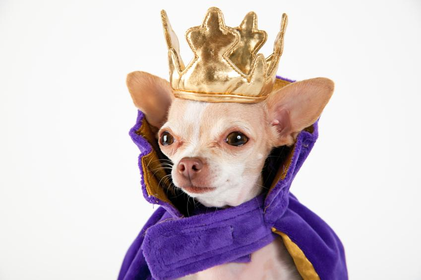Puppy Halloween Costumes & Puppy Halloween Costumes | LoveToKnow