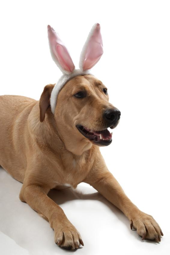 https://cf.ltkcdn.net/costumes/images/slide/105184-566x848-pooch_bunny_ears.JPG