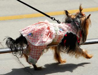 https://cf.ltkcdn.net/costumes/images/slide/104938-520x400-makedog8.jpg