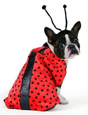 https://cf.ltkcdn.net/costumes/images/slide/104942-308x400-makedog9.jpg