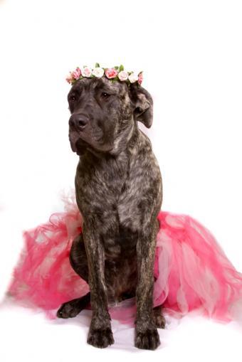 https://cf.ltkcdn.net/costumes/images/slide/105070-566x848-puppy3.jpg