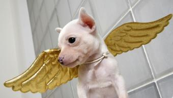 https://cf.ltkcdn.net/costumes/images/slide/105071-850x479-puppy4.jpg