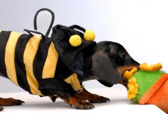 https://cf.ltkcdn.net/costumes/images/slide/105072-841x571-puppy5.jpg
