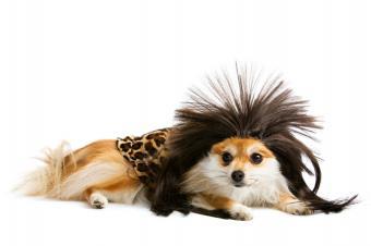 https://cf.ltkcdn.net/costumes/images/slide/105073-849x565-puppy6.jpg