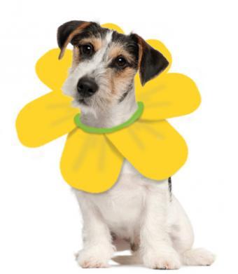 dog flower costume