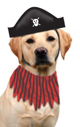 dog pirate costume
