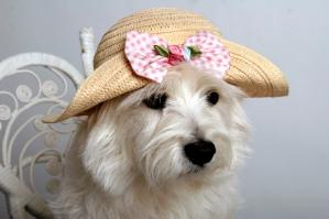 Dog Costume for Easter