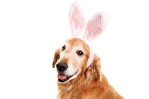 pooch in bunny ears