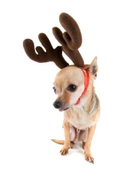 Max the Grinch Dog Costume