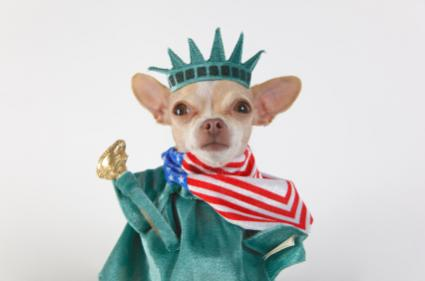 Statue of Liberty dog