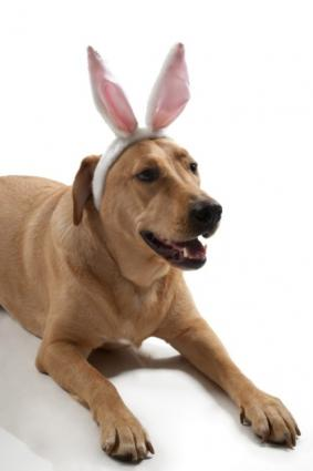 Bunny ears for pooch