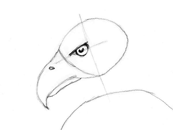 how to draw a bald eagle lovetoknow
