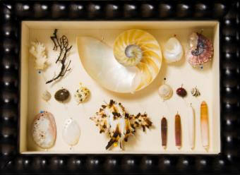 shadow box with shells