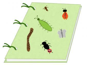 summer camp bug theme autograph book