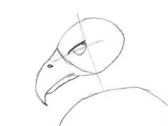 https://cf.ltkcdn.net/crafts/images/slide/179935-600x450-Bald-Eagle-Slide-5-Eagle-Eye-sm.jpg
