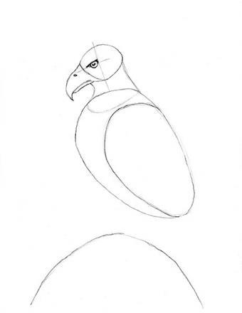 https://cf.ltkcdn.net/crafts/images/slide/179937-464x600-Bald-Eagle-Slide-7-Draw-in-Body-sm.jpg
