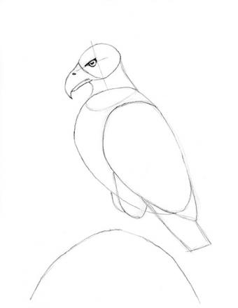 https://cf.ltkcdn.net/crafts/images/slide/179938-464x600-Bald-Eagle-Slide-8-Legs-and-Tail-sm.jpg