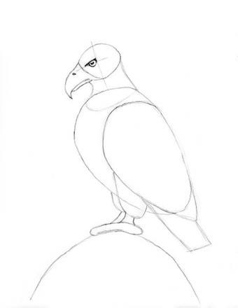 https://cf.ltkcdn.net/crafts/images/slide/179939-464x600-Bald-Eagle-Slide-9-Feet-sm.jpg