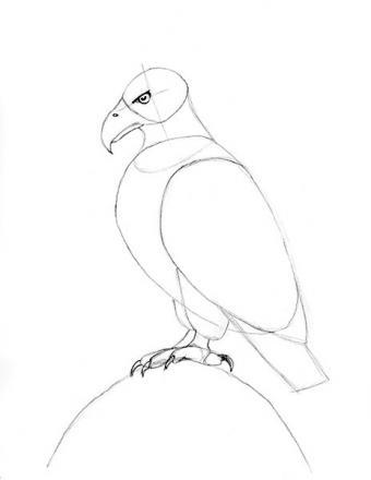 https://cf.ltkcdn.net/crafts/images/slide/179940-464x600-Bald-Eagle-Slide-10-Feet-Detail-sm.jpg