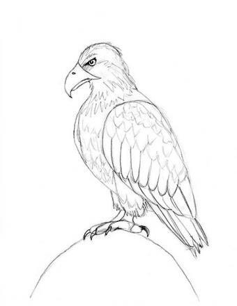 https://cf.ltkcdn.net/crafts/images/slide/179941-464x600-Bald-Eagle-Slide-11-Add-Feathers-v2-sm.jpg