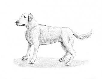 Finished drawing of a dog